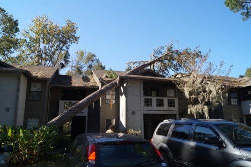 tree removal emergency